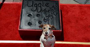 Fallece Uggie, el perro de 'The Artist'