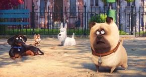 'Mascotas' arrasa en la taquilla española y se convierte en el mejor estreno del año